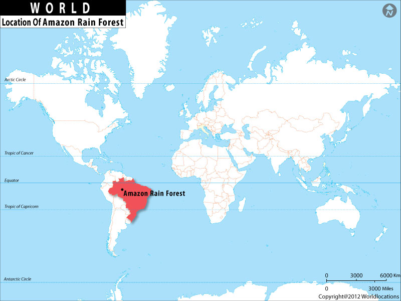 Where is Amazon Rainforest Located, Amazon Rainforest Brazil in